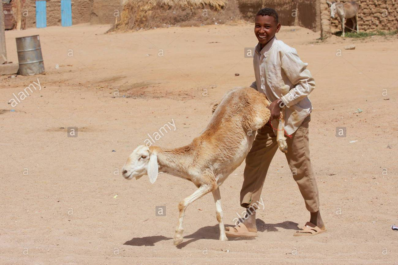 sudanese-boy-with-a-sheep-C22A34